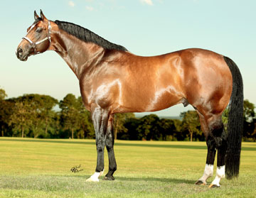 Royal Quick Dash Stallion http://www.stallionesearch.com/show_stallion.asp?horse=208
