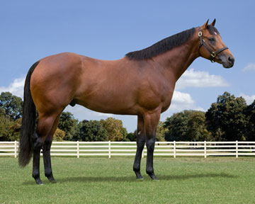 Royal Quick Dash Stallion http://www.stallionesearch.com/show_stallion.asp?horse=953